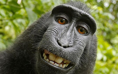 Monkey Selfie: Adventures in Copyright