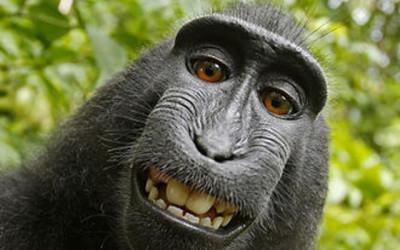 Monkey Selfie: Adventures in Copyright